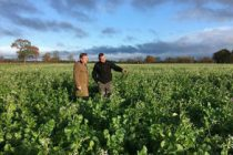Simplified Countryside Stewardship scheme announced